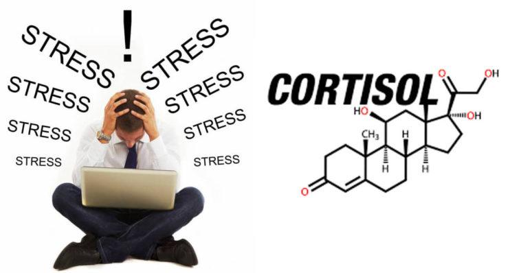 ¡No deje que la hormona Cortisol domine su vida! - e-Consejos