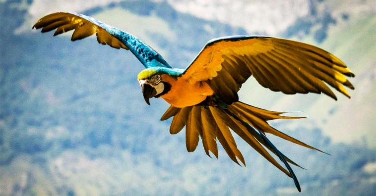 Las 10 Aves Exóticas Más Hermosas Del Mundo