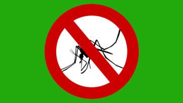 Cómo matar moquitos