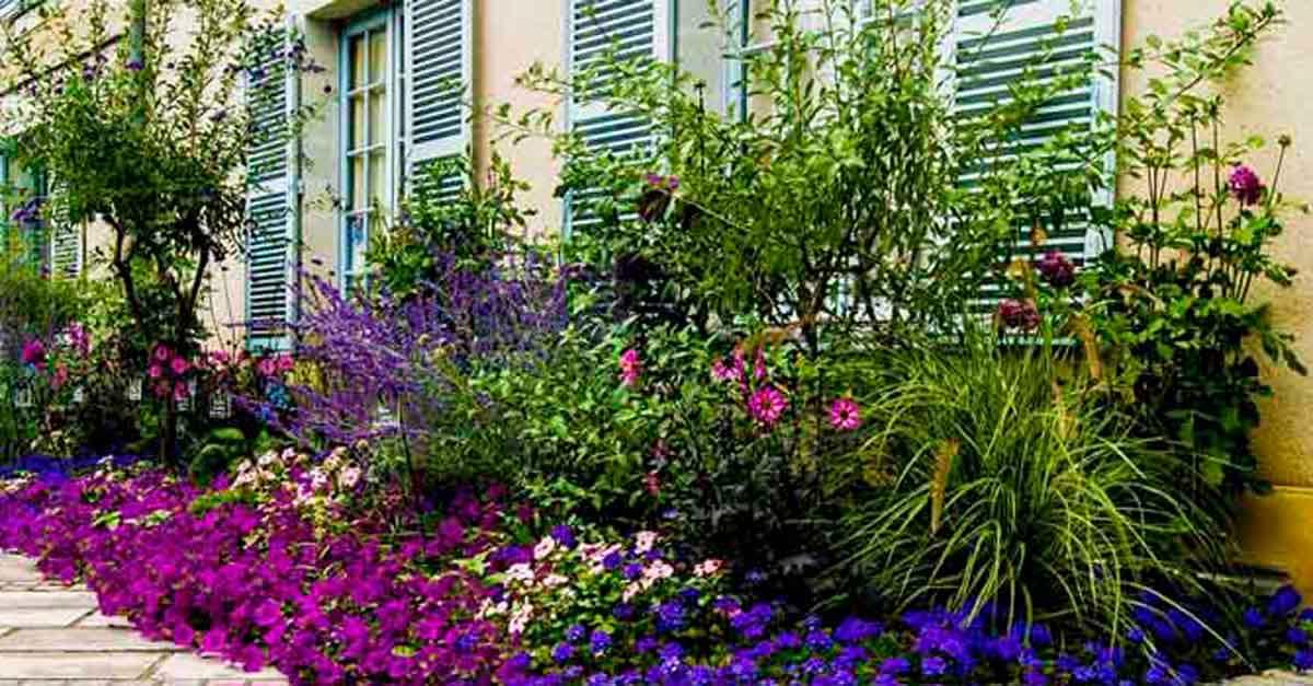 Plantas Sombra Exterior Affordable Tronco Del Brasil With Plantas - Plantas-sombra-exterior