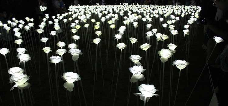arreglos florales flores iluminadas