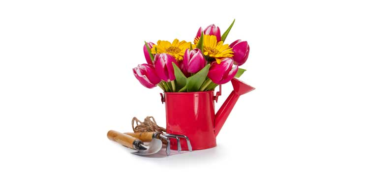 arreglos florales flores regaderas