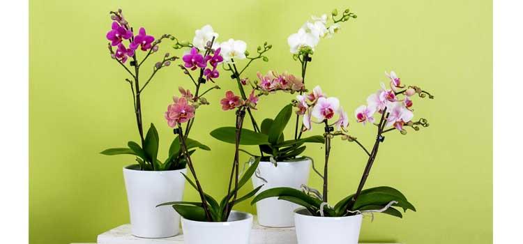 arreglos florales orquideas artificiales