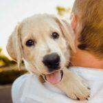 cuidar mascotas