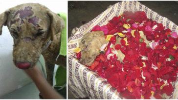 Perrita dio la vida para salvar a sus cachorros