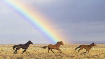 acertijo de caballos