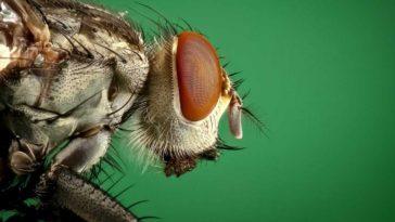 ahuyentar las moscas