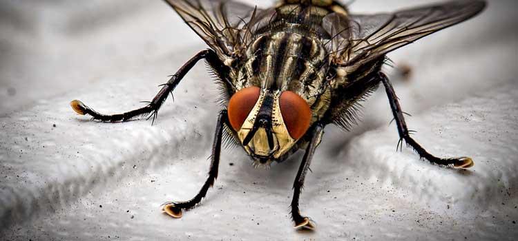 ahuyentar las moscas trucos