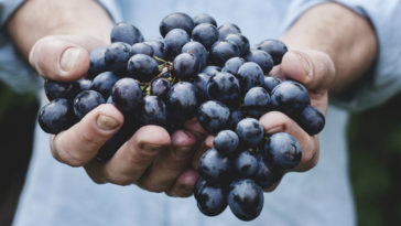 cultivar uvas en casa