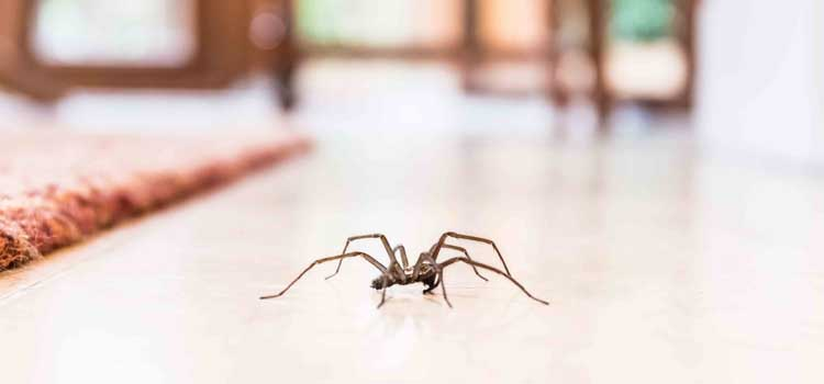 evitar aranas en casa casa