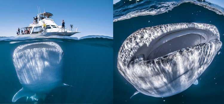 fotos que jamas pensarias que son reales bote