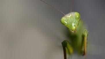 insectos mas peligrosos