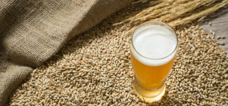 como consumir levadura de cerveza para adelgazar