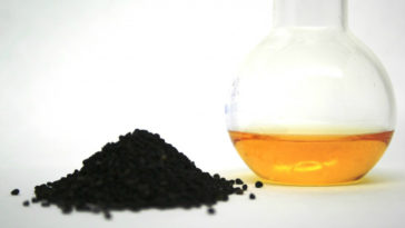 semilla negra